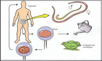 Como trata vermes em um gato